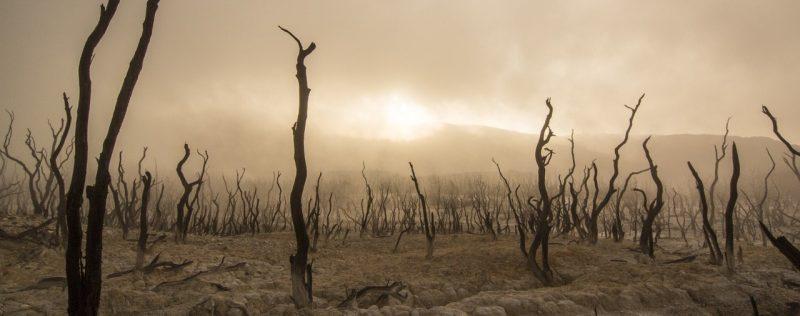 klimaat | Een Blog Hout